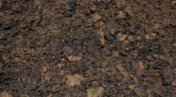 Testimony Thursday: Turned Soil