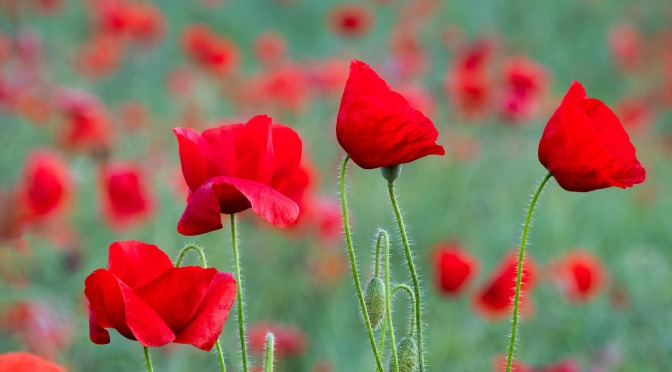 A prayer for Remembrance Sunday